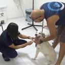 Hospital Veterinário da UNG - 27/02/2020